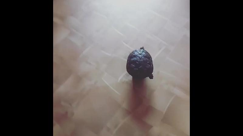 черепаха на гелике