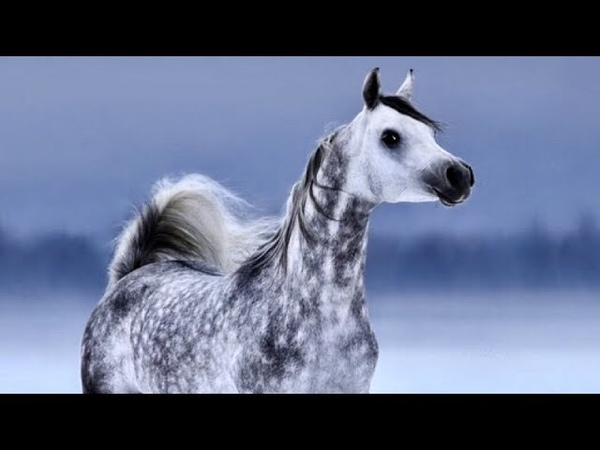 I'd Love To Change The World    Arabian Horse Music Video   