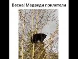 Ничего необычного) Просто мишка на дереве)
