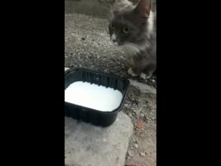 Котик на улице
