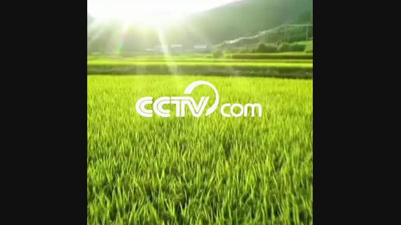 Цветной Китай - зеленый цвет