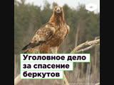 На жителя Брянска завели уголовное дело за спасение беркутов ROMB