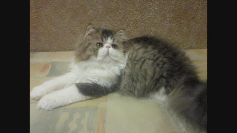 клуб цветоводов, мои котята 023