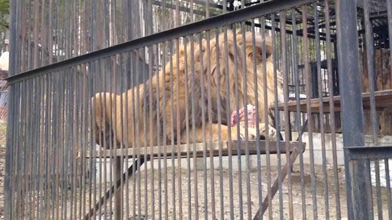 2013-05-09-Зоопарк 4