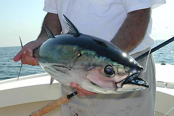 купить тунец