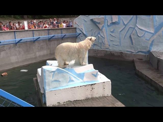 Герда столкнула медвежонка в воду)