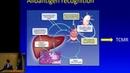 Liver Transplant Immunology