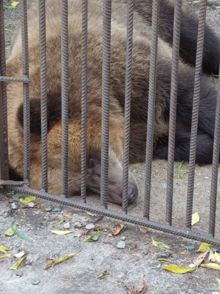 "Санаторий ""Барнаульский"". Медведи."