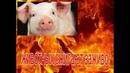 Вот так в РФ уничтожают животных попавших под санкции правительства