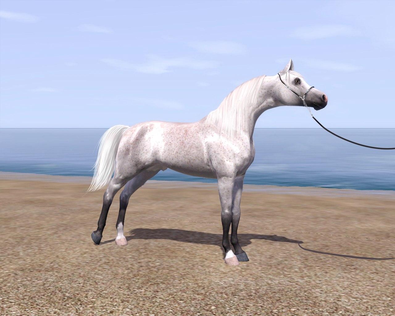 Регистрация лошадей в RHF 2 - Страница 5 UIuwnMqO5CY