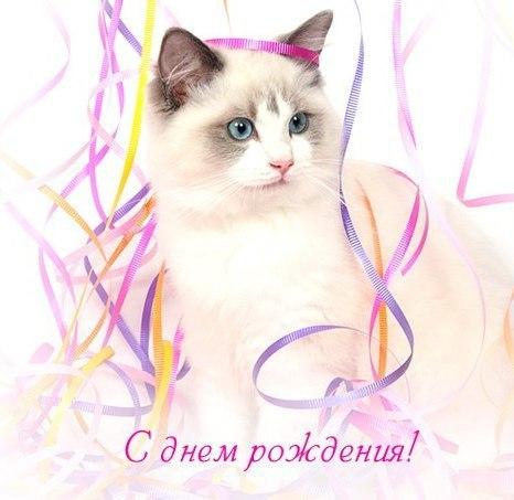 Коту поздравления с днем рождения