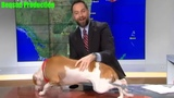 Dog interrupts live weather report at Miami TV station
