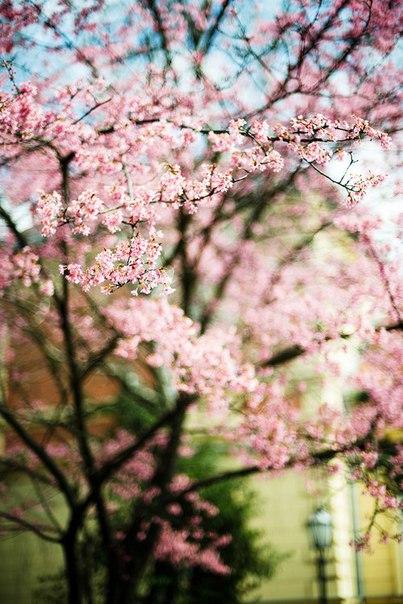 Весна рано или поздно возвращается.