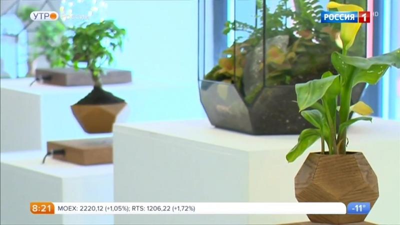 Утро России - Левитирующие растения