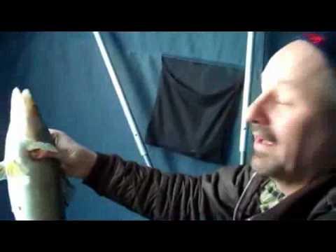 Подледный лов судака на зимние воблеры Salmo Chubby Darters