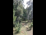 Шахноза Рак - Live