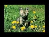 Мой фильм Волчонок