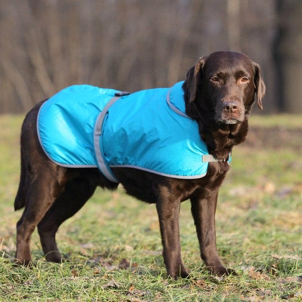 OSSO Fashion - лучшие товары для животных,дрессировки,спорта GUXLSUHlYGk