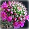 Мир кактусов
