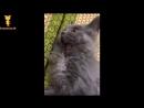 Смешные котики в Японии Funny Cat JP おかしい猫 - かわいい猫 - おもしろ猫動画 HD 109
