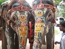 Фестиваль слонов.