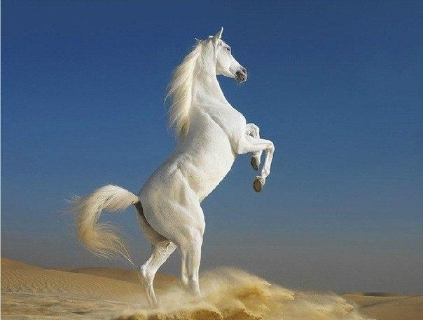 Британский фотограф Тим Флак и его серия впечатляющих работ, посвященных красивым, грациозным и благородным животным – лошадям.