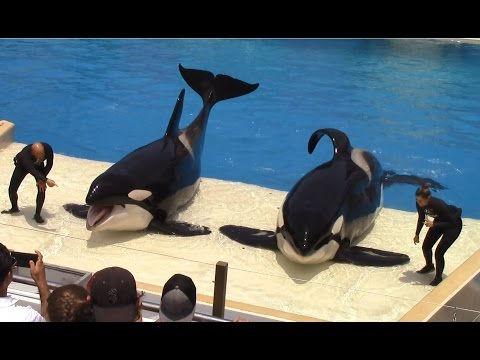 One Ocean Full Show at SeaWorld San Diego on 6 24 16