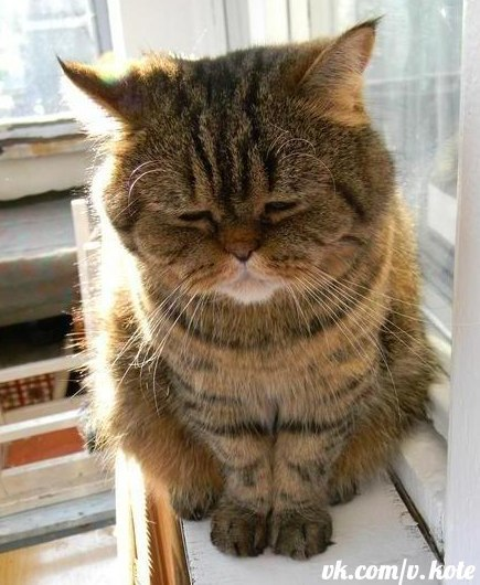 Самые милые котята в мире фото скачать бесплатно - 00eb8