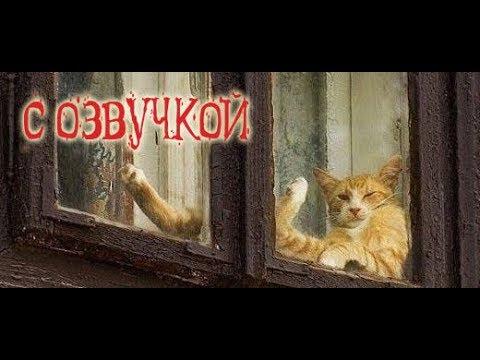Приколы с котами – смешная озвучка животных – кот Мурзик и ТОПовый сборник 2018 от Domi Show