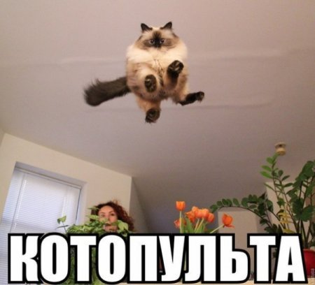 http://cs620931.vk.me/v620931056/1512b/EiAMR_HW0uk.jpg