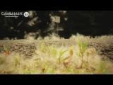 Sergey Alekseev feat. Ai Takekawa - A Way For Us (Original Mix) HD