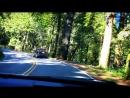 Эвкалипты, кедры, папоротники вдоль лесной дороги на берегу Тихого океана!