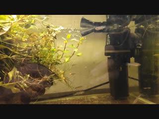 АкваМир - Мальки Fundulopanchax marmoratus Mbonge