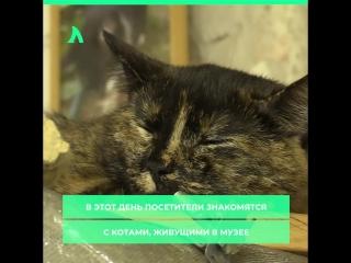 В Петербурге отметили День Эрмитажного кота