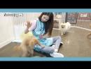 CLC - 둠칯두둠칯 유진 EP.01 유기견 보호소 방문기