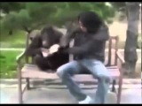 О боже, какой мужчина! прикол с обезьянами премьера клипа!