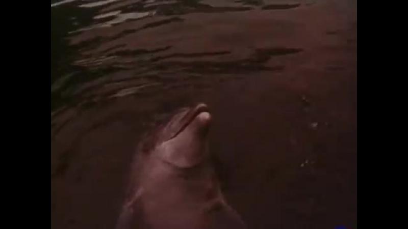 Люди и дельфины Режиссёр Владимир Хмельницкий 1983 г. Часть 1