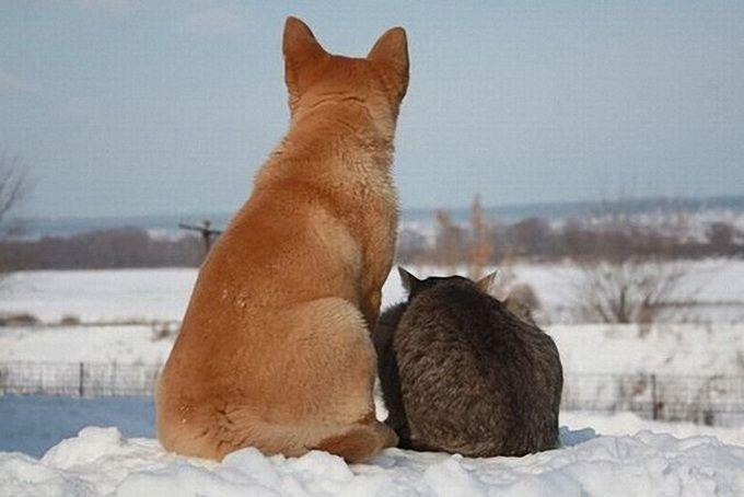 Кошки и прочие забавные животные  - Страница 3 XCtrSISy9HU