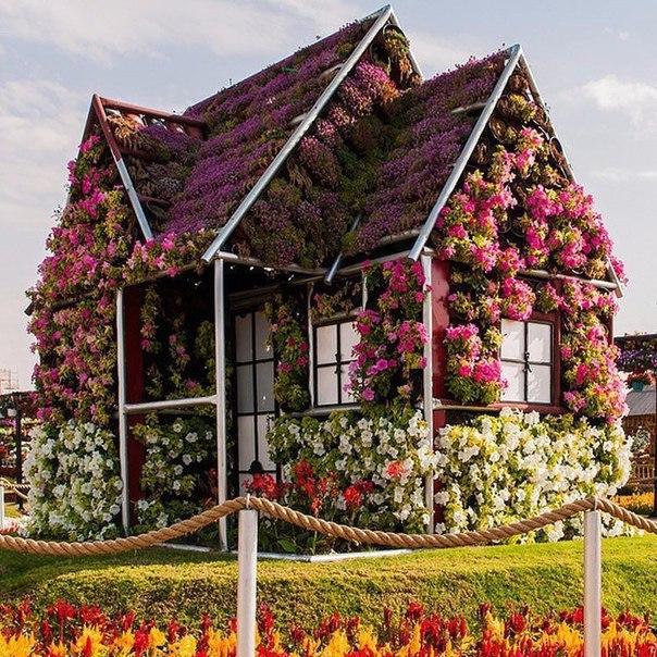 Рисунки красивых домов цветов