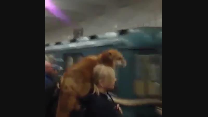Необычный пассажир в метро