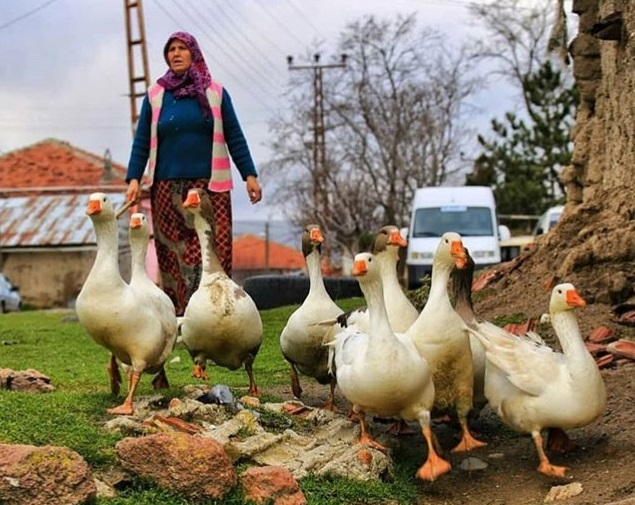 В КЧР более 2 тысяч пенсионеров получили «сельскую» надбавку к пенсии