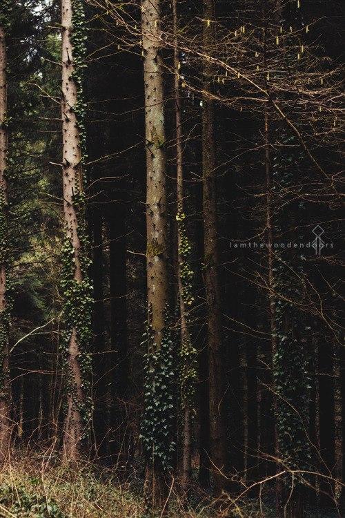 Теневой лес E2jiWSi98d4