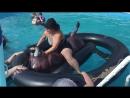 Inflatable Bull Pool Rodeo ViralHog
