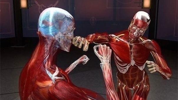 Наука рукопашного боя (2008-2010)