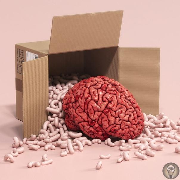 Зачем ученые выращивают в пробирках мозги и смогут ли они научить их думать