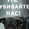 Международный день защиты животных, 4 октября