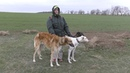 Охотничье хозяйство Южный регион. Испытания борзых собак 2018