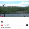 bazil_ika video