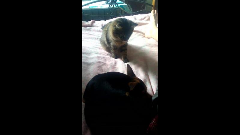 кот изучает Соню