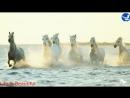 Красивый ролик о лошадях